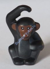 Black Chimpanzee with Reddish Brown Face Pattern
